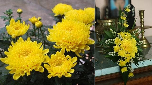 các kiểu cắm hoa cúc vàng (1)