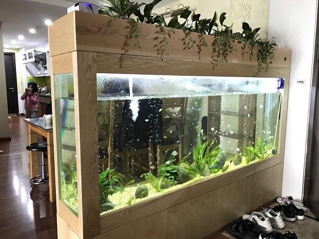 mệnh thủy nuôi cá gì (1)